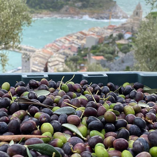 olio carugio porto venere